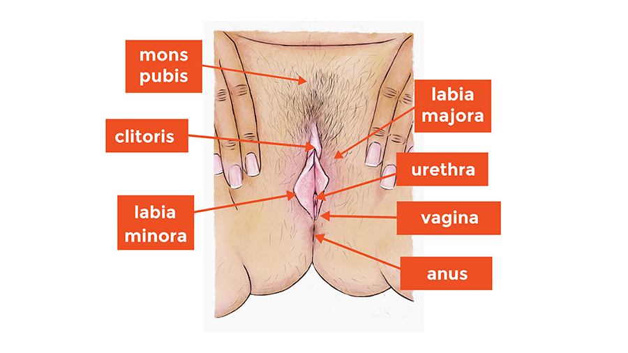 Everything You Need To Know About The Vulva Frank